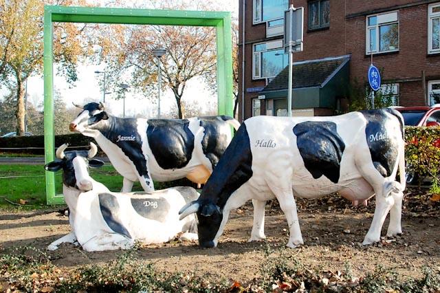 Stads Koeien