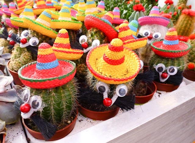 1663: Meneer Cactus(je)