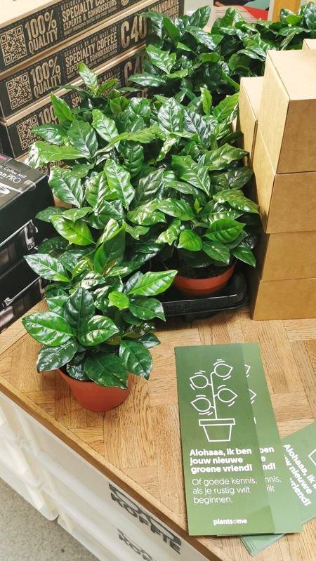 4259: KOFFIE MET PLANT